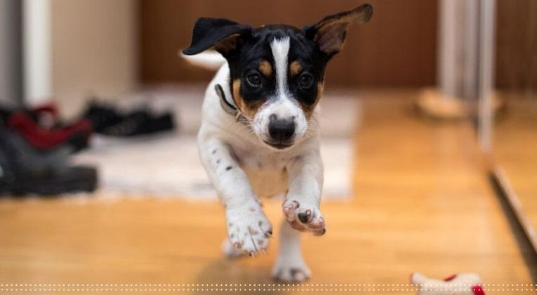 como-fazer-piso-antiderapante-cachorro